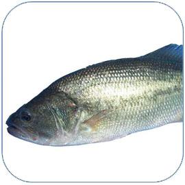 鲈鱼的营养价值 鲈鱼怎么做好吃
