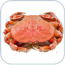 珍宝蟹是高档进口海鲜,肉多肥美营养丰富