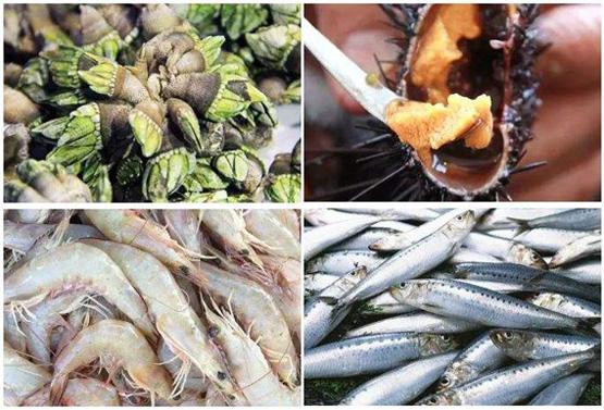 家常海鲜菜谱做法大全,各种海鲜鱼虾蟹的家常做法推荐
