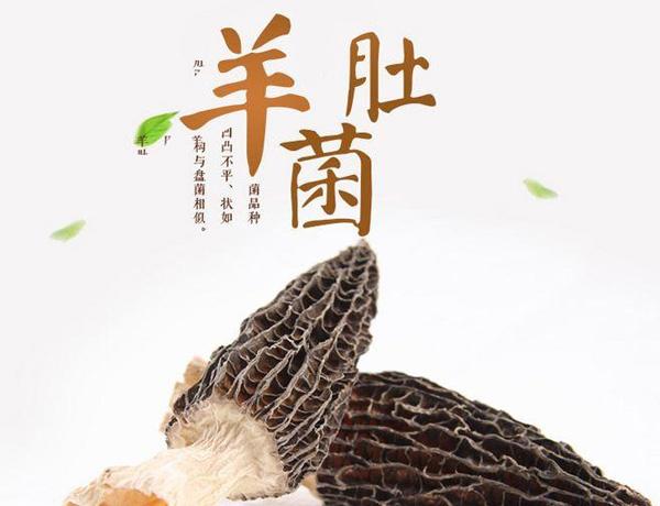 今年头季羊肚菌批发,干货羊肚菌价格多少钱一斤