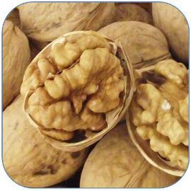 核桃是非常受欢迎的干果 核桃的营养价值和功效作用