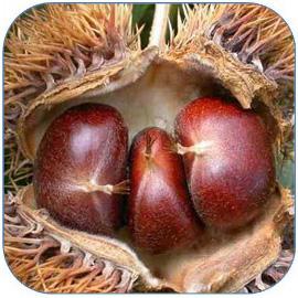 板栗是种营养丰富的坚果 板栗的功效与作用和营养价值