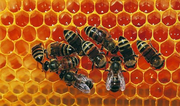纯天然土蜂蜜