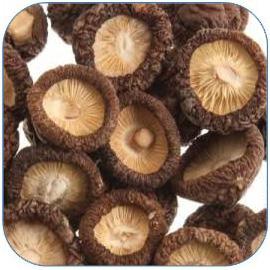 香菇是种高营养价值的蘑菇 香菇的功效与作用和做法大全