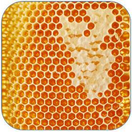 蜂蜜分为土蜂蜜、蜂王浆、蜂胶 蜂蜜的作用与功效