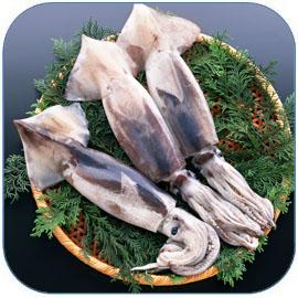 鱿鱼是常见海鲜食品,鱿鱼的营养价值及做法大全